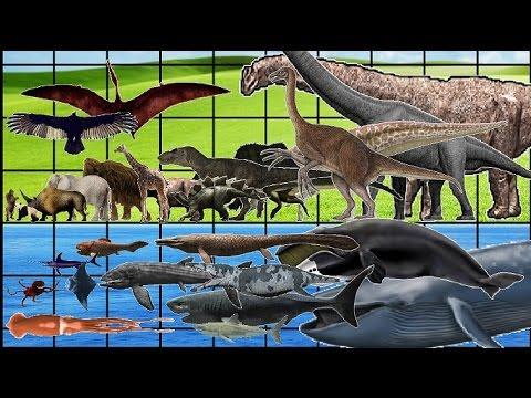 昔の海洋生物や動物・恐竜などのサイズ比較映像