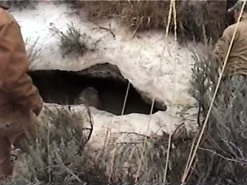 Hunters Rescue Stranded Elk Video