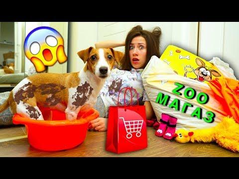 Сходили в Зоомагазин Помыли Собаку Покупки и Обзор Новый Дом Собака в Мегаполисе | Elli Di Pets