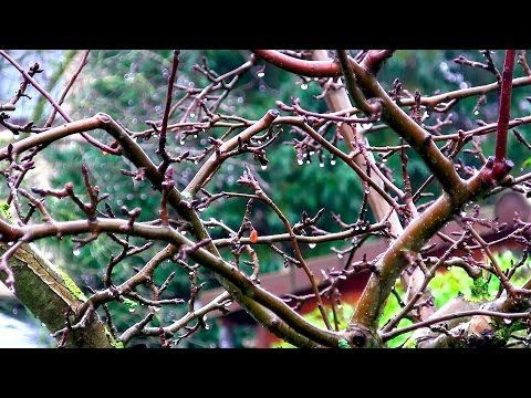 Der Winter Kommt ... (Gewächshaus & Hochbeet Perfekt! Film 17)