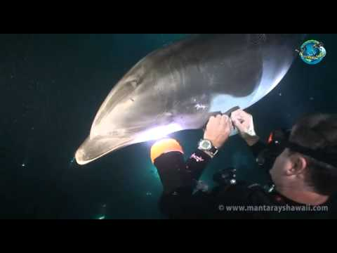 Bottlenose Dolphin Rescue