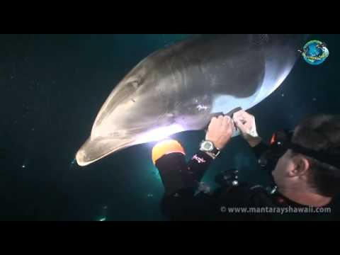 חילוץ מדהים של דולפין מתחת למים