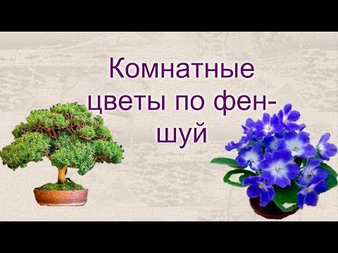 Комнатные цветы по фен шую