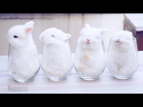 超キュート!ガラスコップの中にすっぽりおさまるうさぎの赤ちゃん