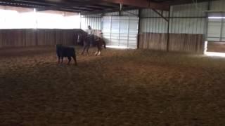 Petunia- Jared Lesh Cowhorses