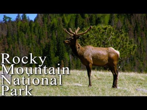 Creaturing around Rocky Mountain National Park