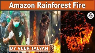 Amazon Rainforest Fire in Brazil - Cause and Impact of Amazon Rainforest Fire - Current Affairs 2019