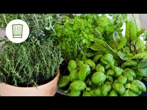 Kräuter: Was Sie Alles über Dill, Salbei, Bärlauch Und Basilikum Wissen Sollten #chefkoch