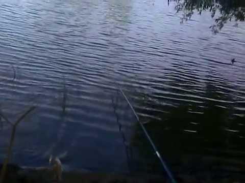 прогноз клева река ишим