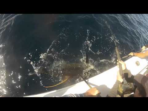 Venice yellowfin tuna fishing january 2012
