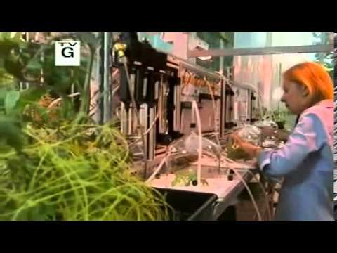 """""""What Plants Talk About."""" Nature. PBS. 3 April 2013. Online video clip. PBS.com Accessed 8/5/2013."""
