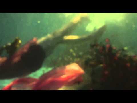 NYMPHETS : Underwater Apocalypse
