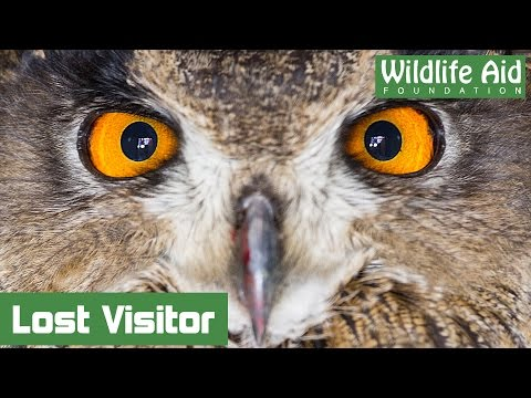 Unusual visitor at Wildlife Aid