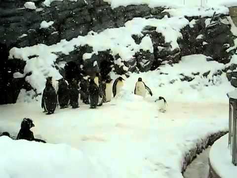 Pingüino bailando Thrash Metal