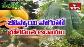 Papaya Cultivation Guidance - 3 వేల హెక్టార్ల విస్తీర్ణంలో సాగు అంచనా - Nela Talli - hmtv - netivaarthalu.com