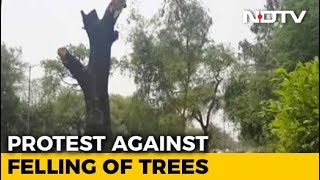 17,000 Trees To Be Felled In Delhi For Government Housing: Official