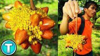 Top 10 Fruits You've Never Heard Of Part 9
