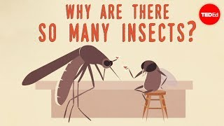 Why are there so many insects? - Murry Gans