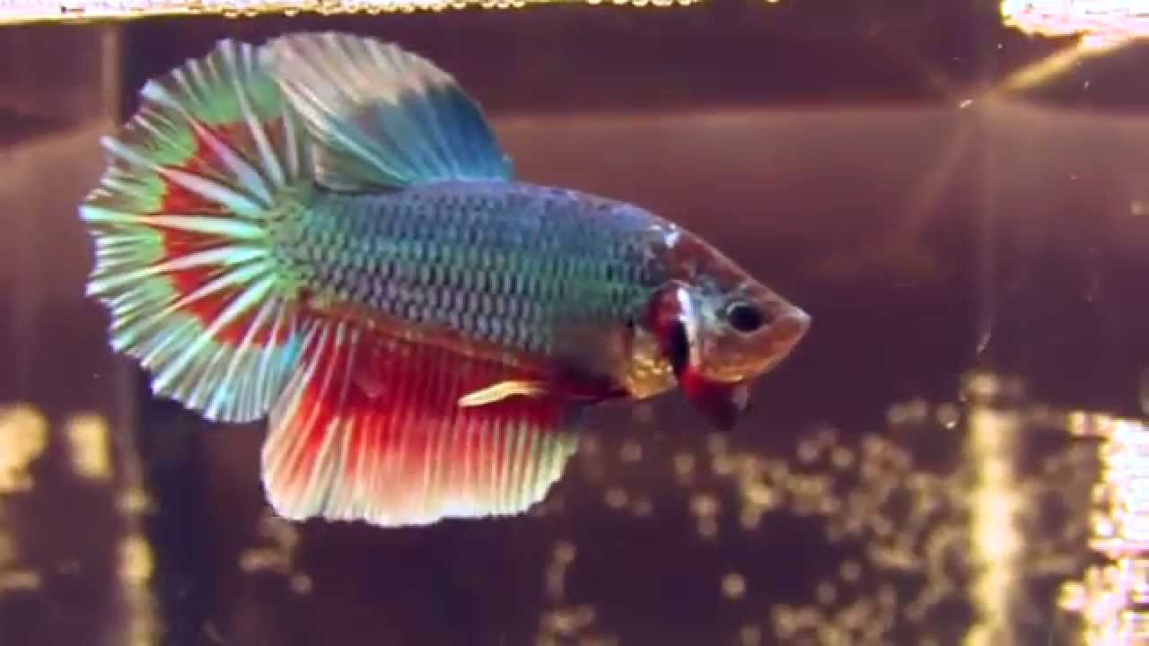 Top 12 Most Beautiful Fish in the World  EnkiVeryWell