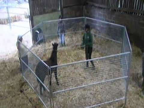 Vanessa Bee Shows Kel Jeffrey's Gentle Horse Training Method Music Videos