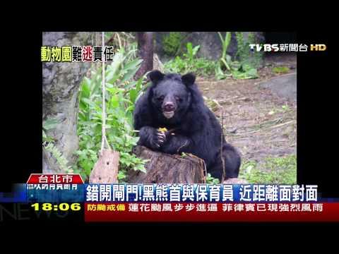 「先跑老虎再放黑熊」 木柵動物園連兩疏失