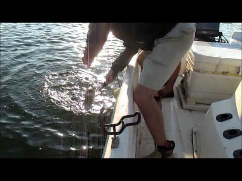 Lake Allatoona Striper and Hybrid Fishing