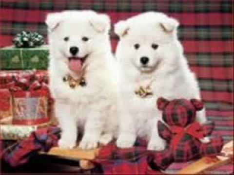 Blanca Navidad cantada por perros