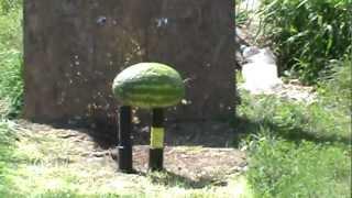 Judge Magnum Shooting .454 Casull 300 Grain Hollowpoint At Watermelon