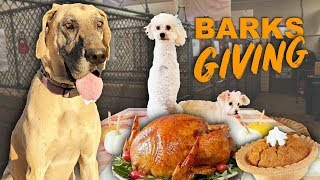 Shelter dogs first Thanksgiving! Amazing Reaction
