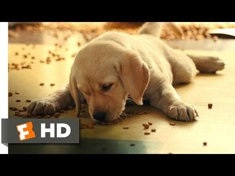 Marley & Me (2/5) Movie CLIP - How Marley Got His Name (2008) HD