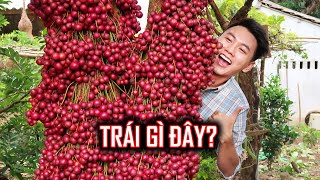 EXTREMELY BEAUTIFUL trees in Vietnam| Phu Yen Travel Guide #1