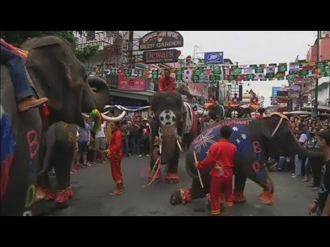 Elephants dance and play football in Bangkok as part of Thailand's World Cup festivities