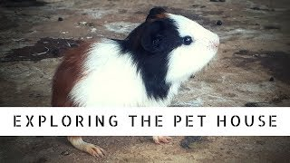 Pet House || Where all Pets can Live Together