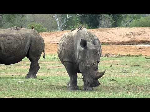 Rhino scene taken @ Swaziland  |  Swaziland/RSA/mozambique trip | 2009 Danny
