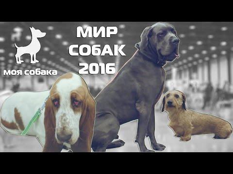 Моя Собака на выставке! Зачем выставлять собаку? Мир собак 30.04.2016