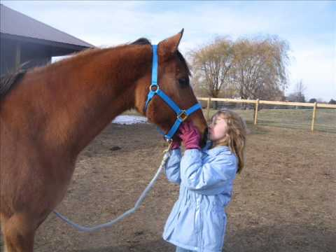 My New Horse