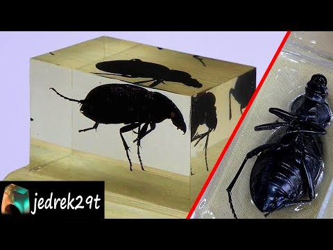 Beetle, Insect in Resin. DIY