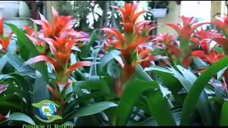 CUIDANDO EL HUERTO. Plantas Ornamentales. 1er Bloque