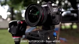 Autofocus Challenge - Canon vs Sony