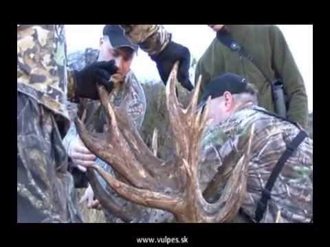 Poľovačka Nový Zéland - Vulpes
