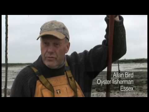 The oystermen of West Mersea