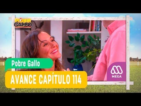 Pobre Gallo - Avance Capítulo 114