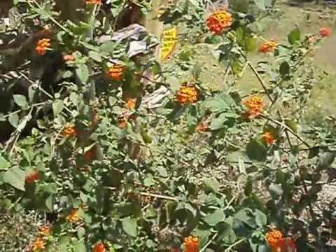 Keranirakaladum Song Jalothsavam Beauty Of Kerala video
