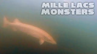 Musky Fishing Mille Lacs MONSTERS!! - CRAZY Underwater Footage