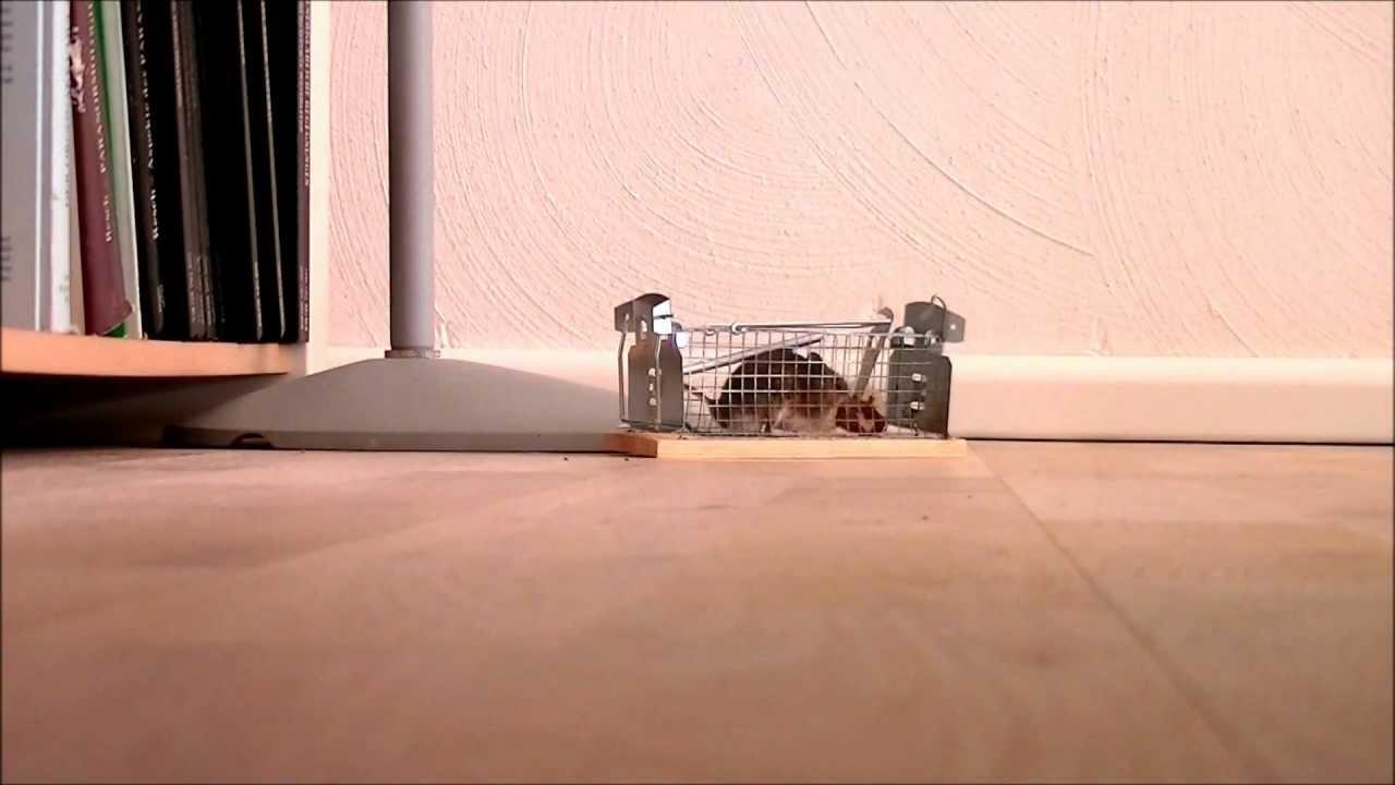 maus in der falle youtube. Black Bedroom Furniture Sets. Home Design Ideas