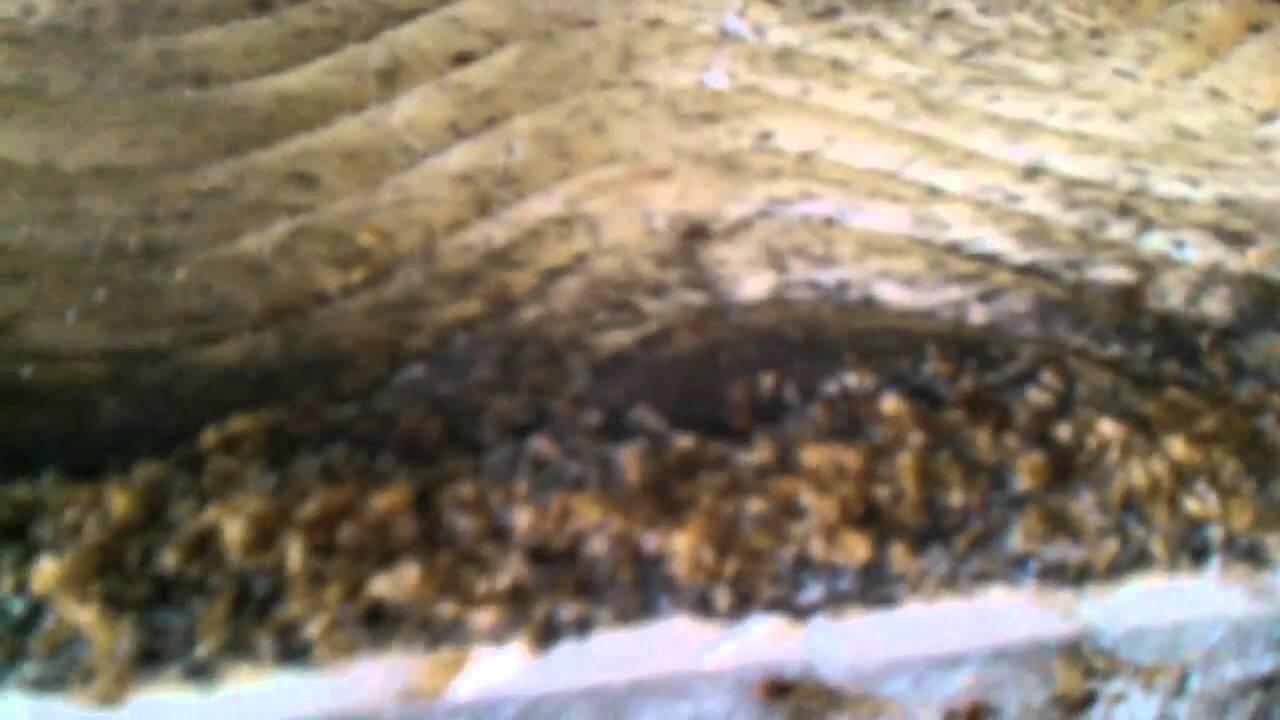 Bed Bug Sightings