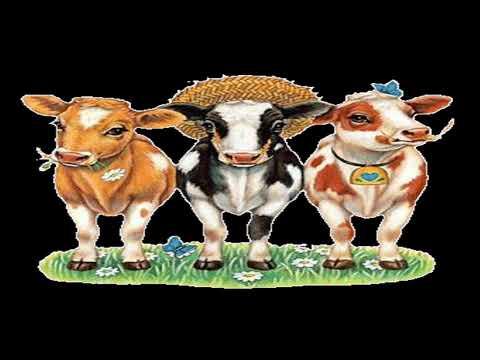 Török és a tehenek Bandibá meséje