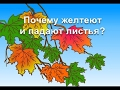 Обучающий мультфильм Почему желтеют и падают листья Развивающий мультик для детей mp3