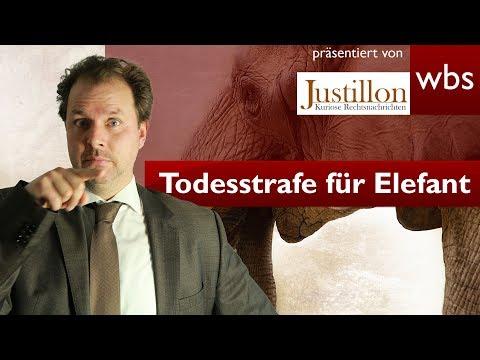 Tiere vor Gericht - Elefant zum Tode verurteilt | RA Solmecke und Justillon