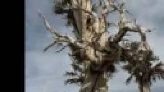 Ebiet G Ade - Berjalan Di Hutan Cemara - Unplugged